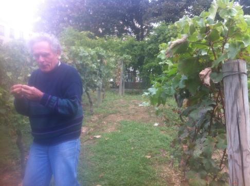 Gérard Joubert dans les vignes à Belleville